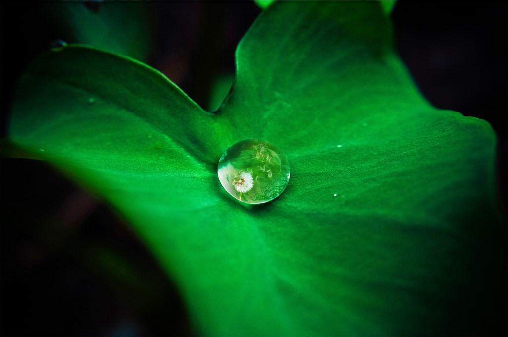 Foto eines Wassertropfens in einem Blatt, in dem sich eine Pusteblume spiegelt.