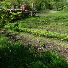 Naturnaher Anbau
