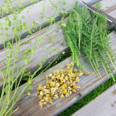 Codex Alimentarius verbietet Anbau und Handel von Kräutern