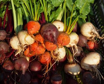 Schluss mit Handel – gemeinsam landwirtschaften!