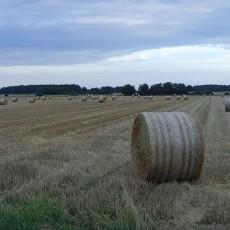 Traktor vs. Pferdestärke vs. Menschenkraft?