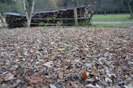 Mit dichtem Laub bedecktes Beet