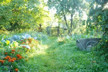 Foto einer bioveganen Mischkultur beim Sonnenaufgang - entstanden am Hof der Familie Langerhorst