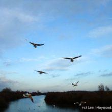 Vögel in grenzenloser Freiheit