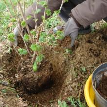 Schritt 5: Noch ein wenig der Anpflanz-Mischung dazu