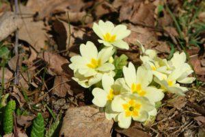Wenigstens Mutter Natur sorgt dafür, dass bei uns schon was wächst und blüht! :)