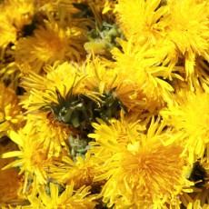 Der gelbe Wunderpuschel