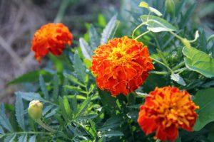 Fotosafari durch unseren Garten 1