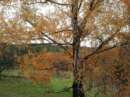Der Herbst bringt Farben und nochmal Schwung vor der Winterruhe :)