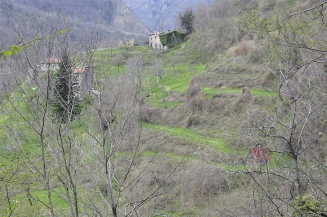 Foto der Castagnola von schräg oben, auf dem man die teils überwucherten Terrassen der Castagnola sieht