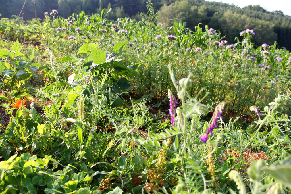 Gen food monsanto seite 33 for Pflanzen fa r flur