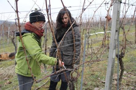 Die Brigitte Gerger der Wieseninitiative erklärt uns exakt, wie der Weinstock aufgebaut sein sollte und wie wir ihn deswegen schneiden werden.