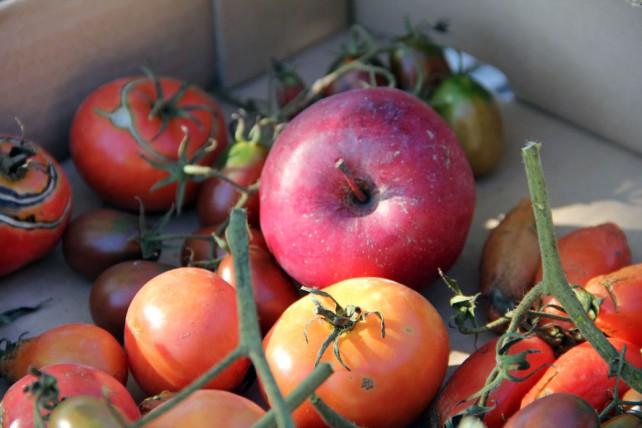 Foto von einem Apfel zwishen Tomaten, der beim Nachreifen hilft.