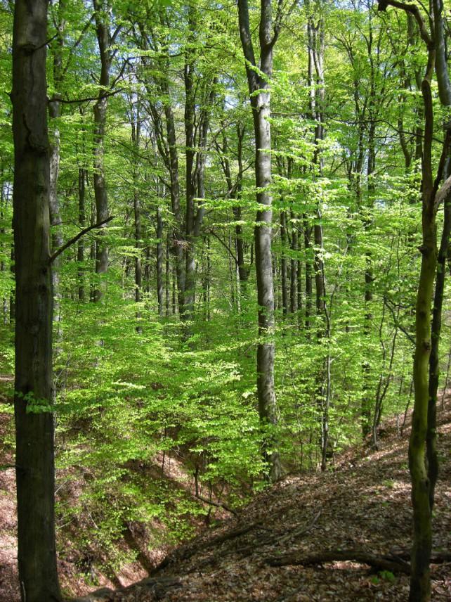 Foto eines naturnahen Waldes