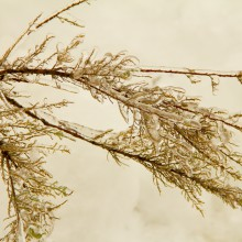 Foto von Pflanze im Eis