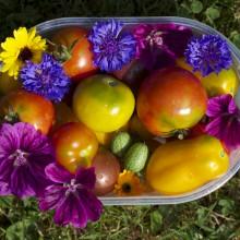 Foto einer Schalte mit bunten Tomaten und Blüten