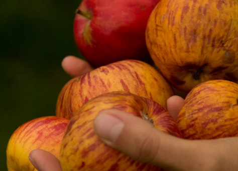 Foto von Äpfeln in Händen.