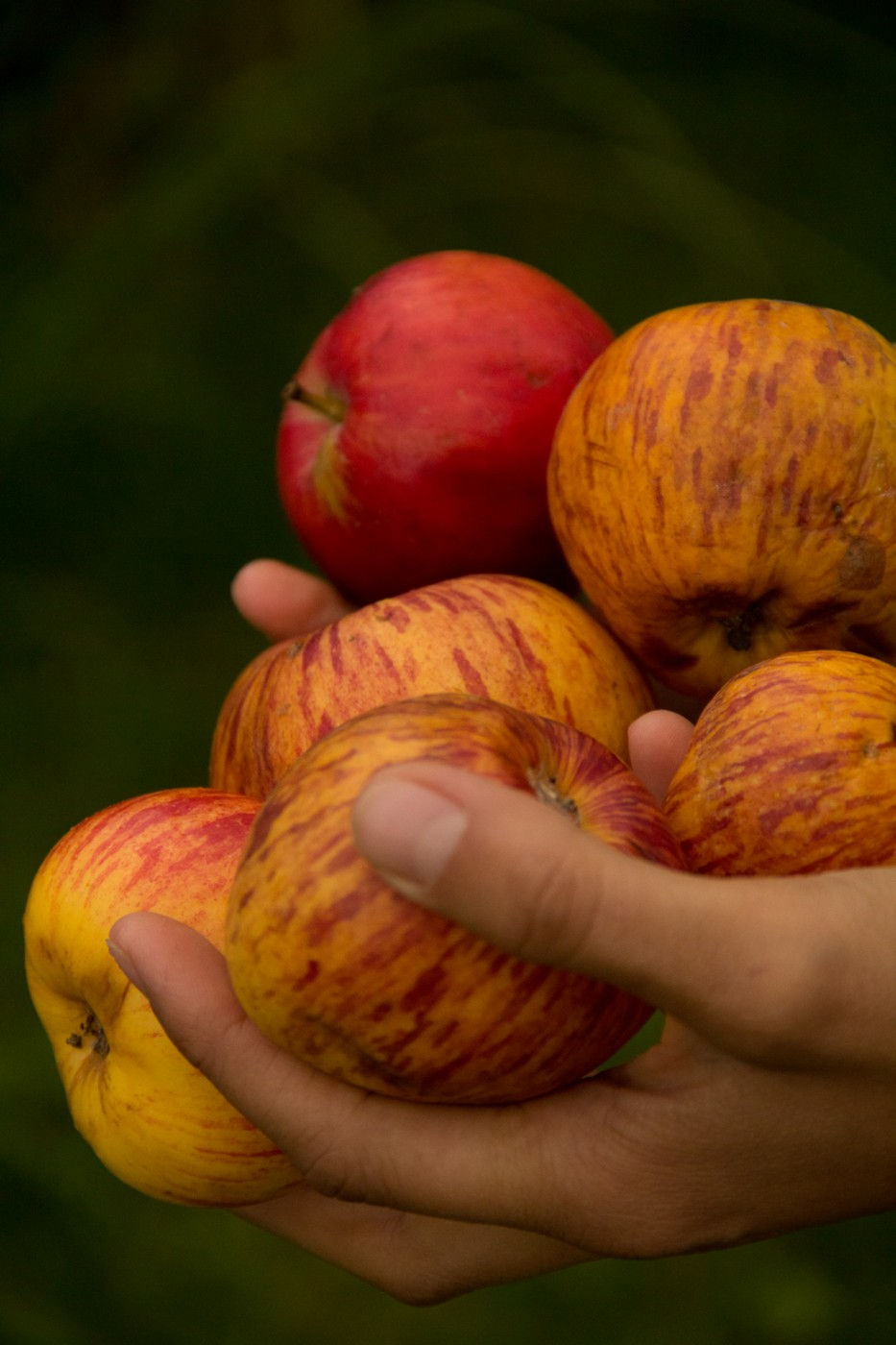 Tausendsassa Apfelessig