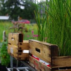 Unser Gründach mit Pflanzenkläranlage