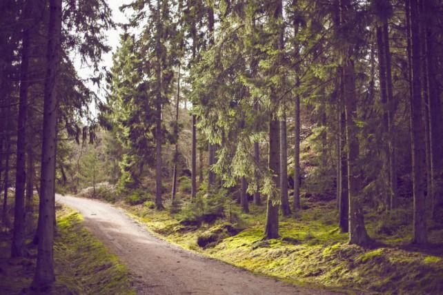 Foto eines Waldes von unsplash.com