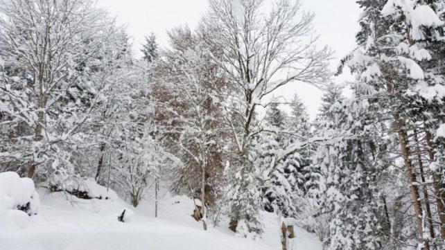 Foto eines schneebedeckten Waldes