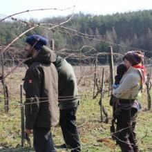 Foto von einer Gruppe Menschen beim Weinschneiden