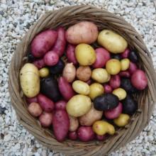 Foto von vielfältigen Erdäpfeln in einem Weidenkorb