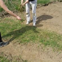 Foto von zwei Menschen die frischen Grasschnitt als Mulch auf die Fläche aufbringen.