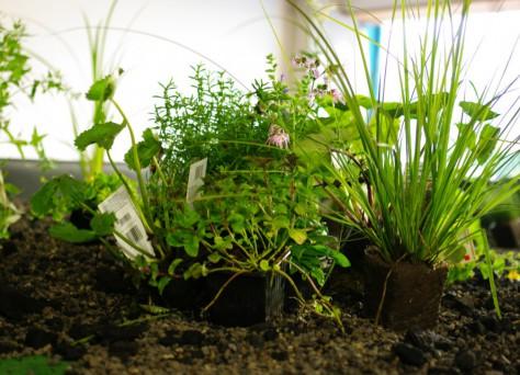 Pflanzenkläranlage im Wohnwagon