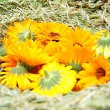 Foto von Korb aus Gras mit Ringelblumen
