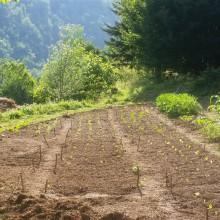 Foto eines Beetes, auf dem unter anderem junge Salate ausgepflanzt wurden.