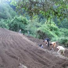 Foto von mehreren Menschen beim Arbeiten auf einer Terasse, die darüberliegende ist schon wieder bereit, bepflanzt zu werden