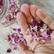 Foto von getrockneten Blüten von der Wildrose