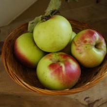 Foto von frischen Äpfel vom Baum