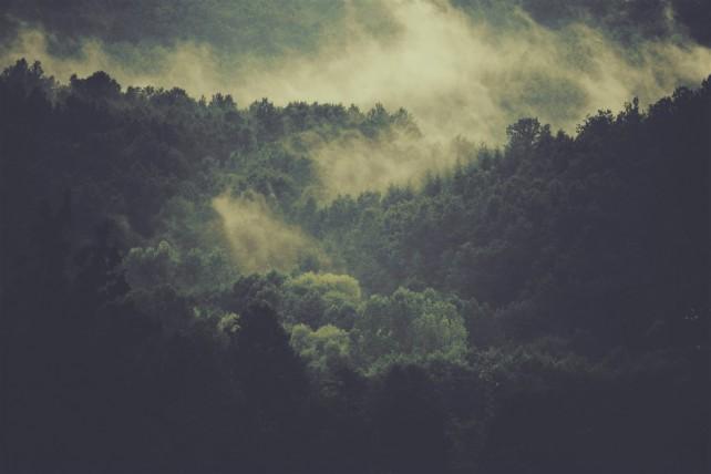 Foto eines Waldes im Morgennebel