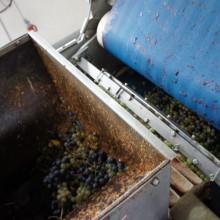 Foto von Trauben, die in die Saftpresse geschüttet werden.