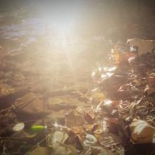 Die Sonne glitzert im Wasser am Ufer.