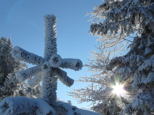 Verschneite Tannen mit Sonnenschein