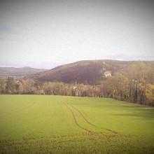 Eine herbstliche Landschaft mit Hügeln und einem Getreidefeld mit frisch aufgelaufenem Grün.