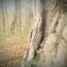 Nahaufnahme einer Baumrinde.