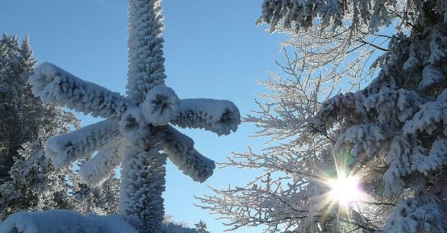 Winterbaum mit Sinne im Hintergrund