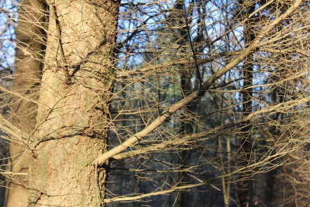 Ein Baum vom Sonnenlicht angestrahlt