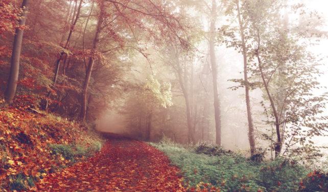 Foto eines Weges im Herbstwald von unsplash.com