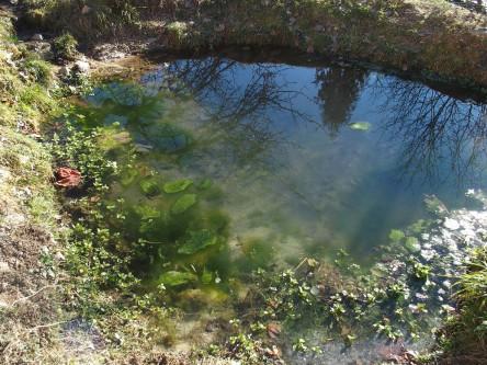 Ein kleiner Teich mit Wasserpflanzen und Algen