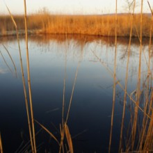 Dunkelblaues Wasser am Ufer des Neusiedlersees