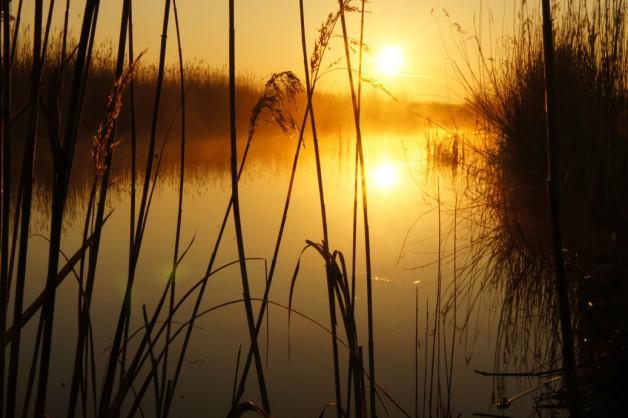 Sonnenaufgang am Neusiedlersee