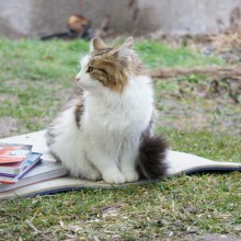 Auch Katzenspuren kann man bestimmen :)
