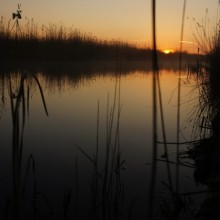 Mystisches Ufer am Neusiedlersee in der Morgendämmerung