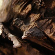 Holz und Rinde