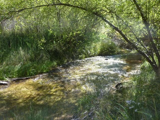 Foto eines Bachlaufes in einem Wald